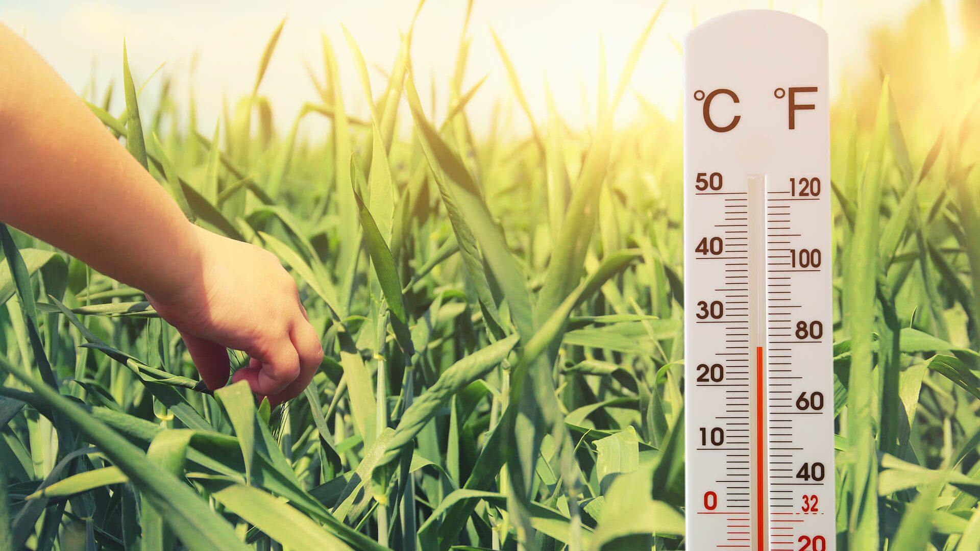 termometro-campo